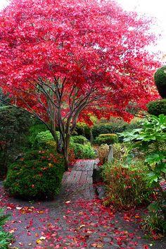The Japanese Garden Calderstones Park, Liverpool, England