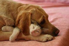 Dog and cat nap