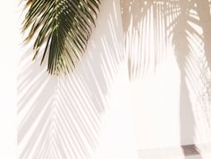 shadow play / LA
