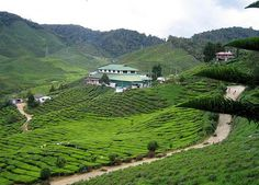 Cameron Highlands Resort, Pahang, M