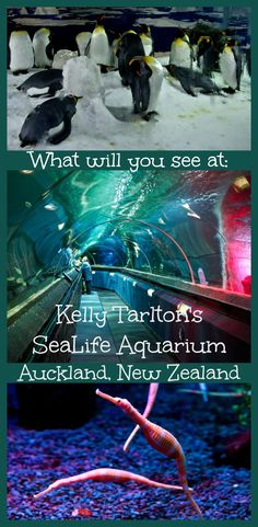 I love animals so very much and the only other aquarium I've ever been to is the one in Camden. The one in New Zealand seems to be really beautiful.