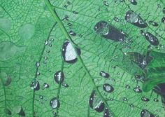 How to Paint Raindrops on a Leaf in Watercolour | Features | Painters Online