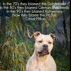 Dont blame the Pit Bull.