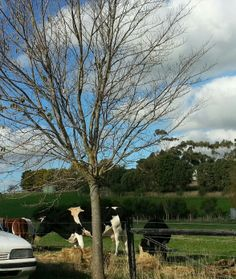 Cattle eating their hay; Autumn day.