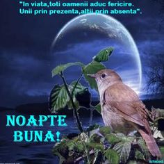 Noapte... Good Night Greetings, Gifs, Christian Videos, Beautiful Birds, Animals, Night Quotes, Swans, Peacocks, Facebook