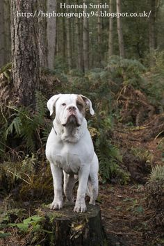 handsomedogs: Photo
