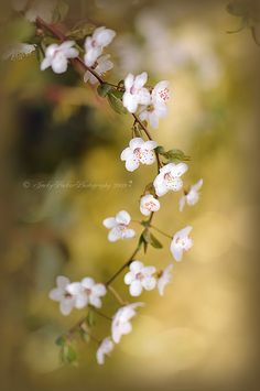 Soft on Spring by Jacky Parker Floral Art, via Flickr