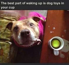 Best part of waking up....