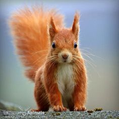 Squirrel...so cute!!!