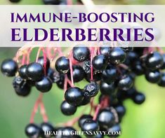 Elderberries are on the rise thanks to their healthy and anti-inflammatory effects. (Searches for elderberry recipes +685%)