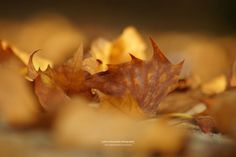 autumn leaves / makro II by nadine schumacher