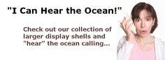 Seashells from Seashell World - Buy Seashells, Starfish, Sand Dollars and Craft Shells Online