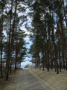 Pathway to the sea - Palanga, Lithuania
