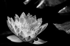 Black and White Collection - CLDavis Photography