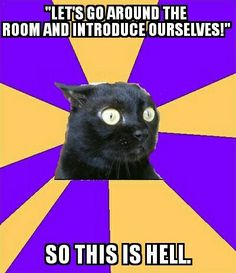 Social anxiety cat