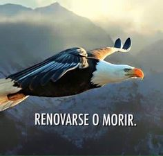 Está en tus manos...Elijo volar alto, concretando mis sueños, sè, lo percibo, que ya es realidad. Bald Eagle, Strong Words, Faith In Love, Wise Quotes, Bible Verses, Thoughts, Of My Life, Positivity, Birds