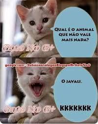 Resultado de imagem para piadas com o gato kkkk