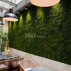 Murs Végétaux Stabilisés d'Intérieur - Déco Végétale