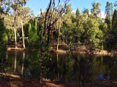 John Forrest National Park - Buggybuddys guide for families in Perth Kids Picnic, Picnic Spot, Camping Spots, Western Australia, Perth, Walks, Countryside, The Good Place, Families