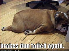 Funny Animals: Funny Bulldogs