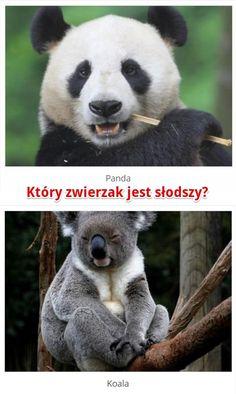 Który zwierzak jest słodszy? http://www.ubieranki.eu/quizy/co-wolisz/89/ktory-zwierzak-jest-slodszy_.html#CoWolisz
