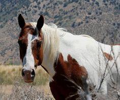 ...horse - http://www.1pic4u.com/blog/2014/09/04/horse-8/