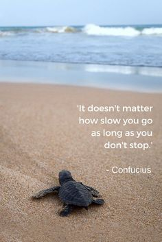 'It doesn't matter how slow you go as long as you don't stop.'  - Confucius