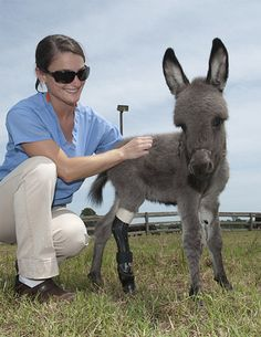 Baby Emma steps out on her prosthetic limb - News - Horsetalk.co.nz