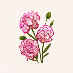 Carnation Drawing, Flower Bouquet Drawing, Flower Bouqet, Carnation Bouquet, Pink Carnations, Flower Art, Dianthus Flowers, Dianthus Caryophyllus, White Rose Flower