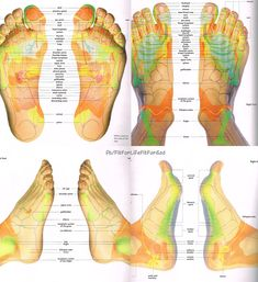 Foot Reflexology Chart Foot Reflexology is based on the principle that there are reflexes in the feet which correspond to every part, gland and organ of the body. Reflexologists divide the body into vertical zones with the left foot corresponding to the left side of the body and the right foot with the right side.Through application of pressure on these reflexes, reflexology relieves tension, improves circulation and helps promote the natural function of the related areas of the body.