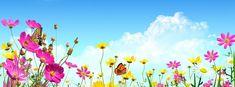 Flowers Timeline Cover - Facebook timeline covers maker