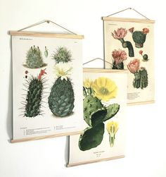 Vintage botanical cactus pull down chart prints by Curious Prints