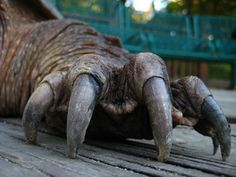 reptile claws - Google Search