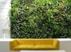 mur végétal intérieur avec plantes grimpantes et canapé jaune                                                                                                                                                                                 Plus