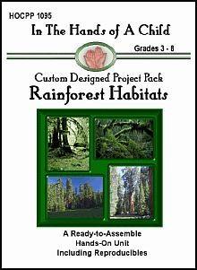 rainforest lapbook