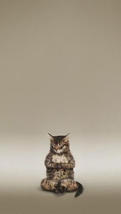 .... in meditation