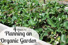 4 Steps to Planning an Organic Garden