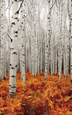 Silver birch & autumnal ferns - applique idea
