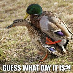 Ha ha... Waterfowl Obsessions