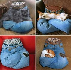 Lap kitty pillows!