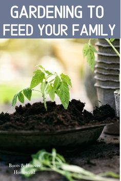 Coming up with a plan and a system for gardening to feed your family doesn't have to be super complicated. It does take a bit of research and some trial and error. #garden #gardenplanning #gardeningtofeedyourfamily