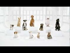 Star Wars Song DOGS Commercial VW - YouTube