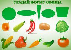 центра формы овощей в картинках экспонатов морского