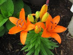 the orange blooms