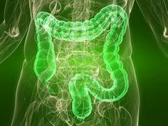 Awesome L'intestino è l'organo più complesso, a parte il cervello, del nostro organismo oltre ad essere il più grnade...   Impronta Unika Check more at http://ukreuromedia.com/en/pin/1230/