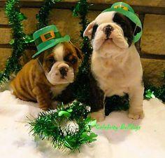 St. Patrick's Day Bulldogs.