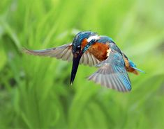 Gratitude is an art of painting an adversity into a lovely picture. Common Kingfisher, Kingfisher Bird, Exotic Birds, Colorful Birds, Beautiful Birds, Animals Beautiful, Animals Images, Cute Animals, Champs