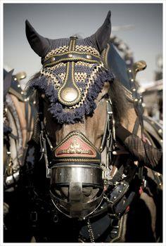 Horses at work at the Oktoberfest in Bavaria. - Heavy Draft horses