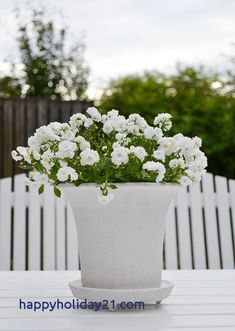 Discover the best plants for your very own backyard vegetable garden. Check out our article that shows you the easiest plants to get started. Vegetable Garden Planner, Backyard Vegetable Gardens, Garden Soil, Patio Plants, Cool Plants, Outdoor Planters, White Flowers, Beautiful Flowers, Fall Vegetables To Plant