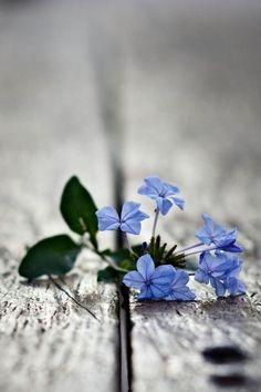 "via The Secret Garden - wayfaringheart: ""Life will defend itself no matter how small it is"" ~Yann Martel, Life of Pi (via handofatmea)                                                                      ✖                                                ❖         Source:                               pjlambert88"
